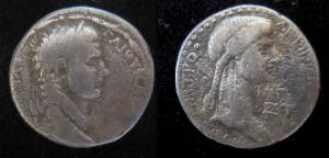 Caligula tetr new