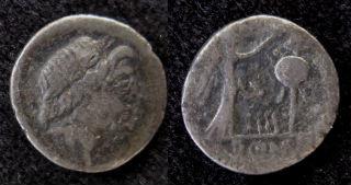 Quinarius small